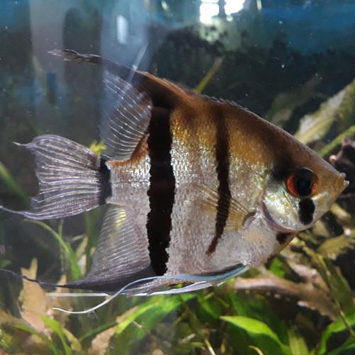 nachm_aquarien